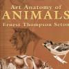 Art Anatomy of Animals $19.50